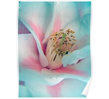 Flower in Pink and Blue Poster