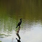 Bird on the Water by artgoddess