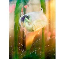 The Faerie's Nest Photographic Print