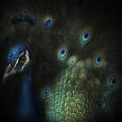 Pozing peacock by EbyArts