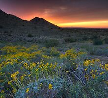Sonoran Desert Beauty by Sue  Cullumber