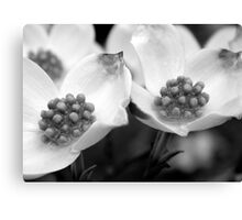 Dogwood Petals - B&W    ^ Canvas Print