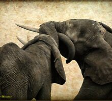 ELEPHANT INTERACTION - THE ELEPHANT - Loxodonta africana - Afrika Olifant by Magriet Meintjes