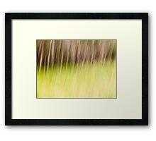 gum trees in field Framed Print