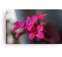 Flower in the Garden #2 Canvas Print