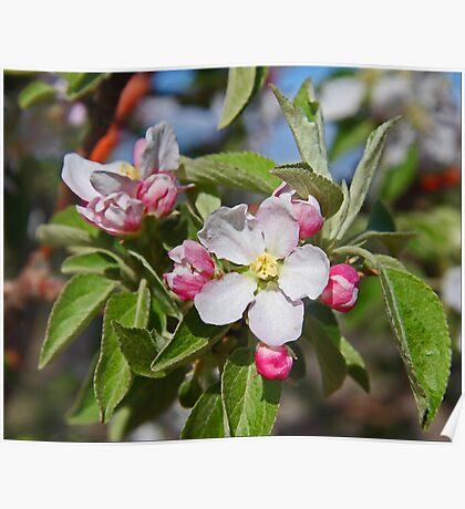 Budding Peaches Poster