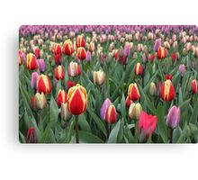 Colorful Tulips in Keukenhof Gardens Canvas Print