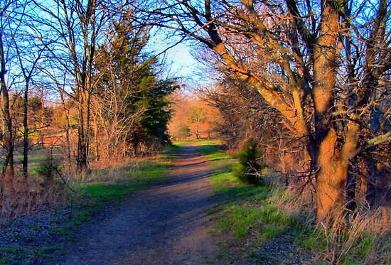 Walking Path by aprilann
