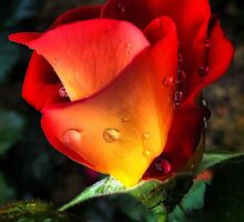 Flame in the Rain by George Petrovsky