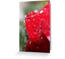 For The Love of Roses Greeting Card