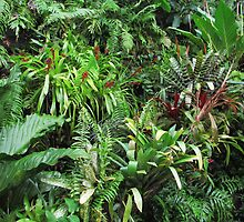 Tropical Forest Flora Background by kirilart
