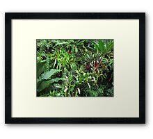 Tropical Forest Flora Background Framed Print