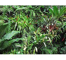 Tropical Forest Flora Background Photographic Print