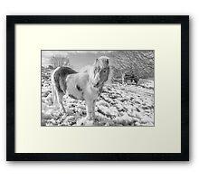 Snow Ponies by Smart Imaging Framed Print