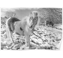 Snow Ponies by Smart Imaging Poster