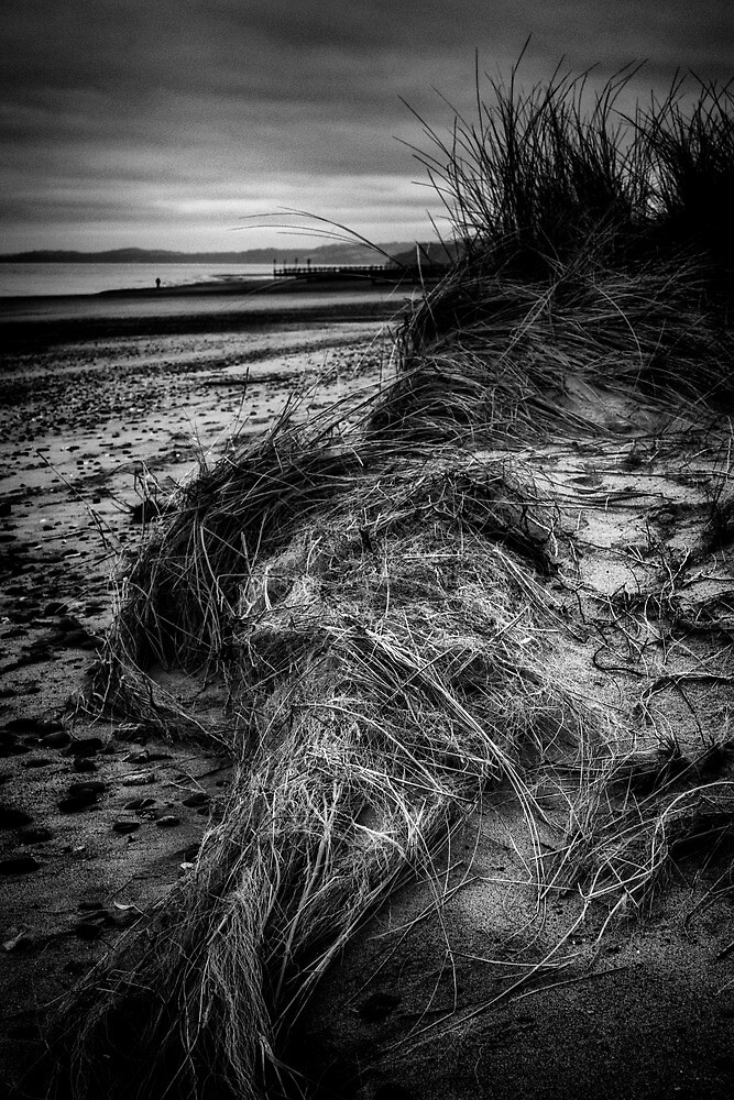 Down Among The Dunes by Michael Carter