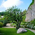 The tree and the stone by Karo / Caroline Evans (Caux-Evans)