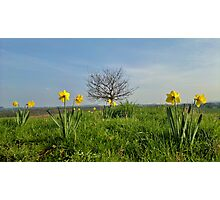 Shropshire in Spring Photographic Print