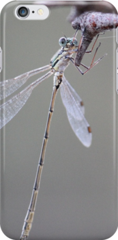 Dragonfly by Hansipan