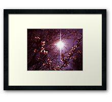 Magical Blossoms Framed Print