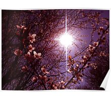 Magical Blossoms Poster