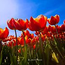 We need Spring and sunshine by John44