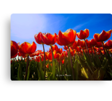 We need Spring and sunshine Canvas Print