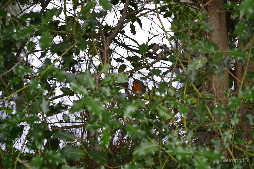 The Robin In The Holly Bush by Sauropod8