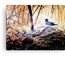 Duck on Some High Water Debri Canvas Print