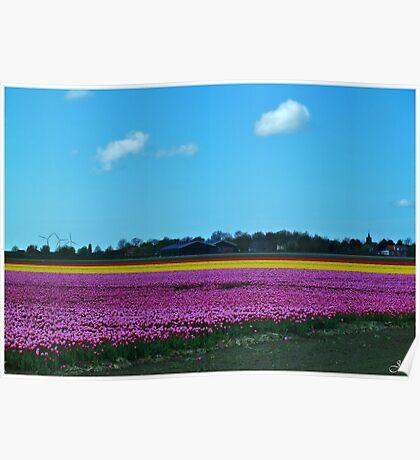 Dutch Tulip Field 2 Poster