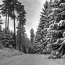 Winter in Forsheda's track II by João Figueiredo