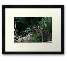 A red, green and blue Macaw on a branch Framed Print