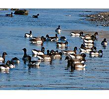Flock of Brants Photographic Print