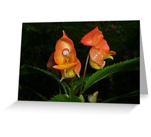 Flowers at the Botanical Garden, Paignton Greeting Card