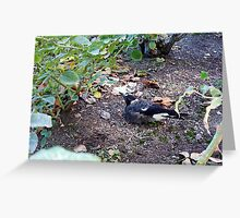 Vaguely An Observation Of Magpie Behaviour - 030413 Greeting Card