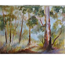 Wombat Forest Daylesford Photographic Print