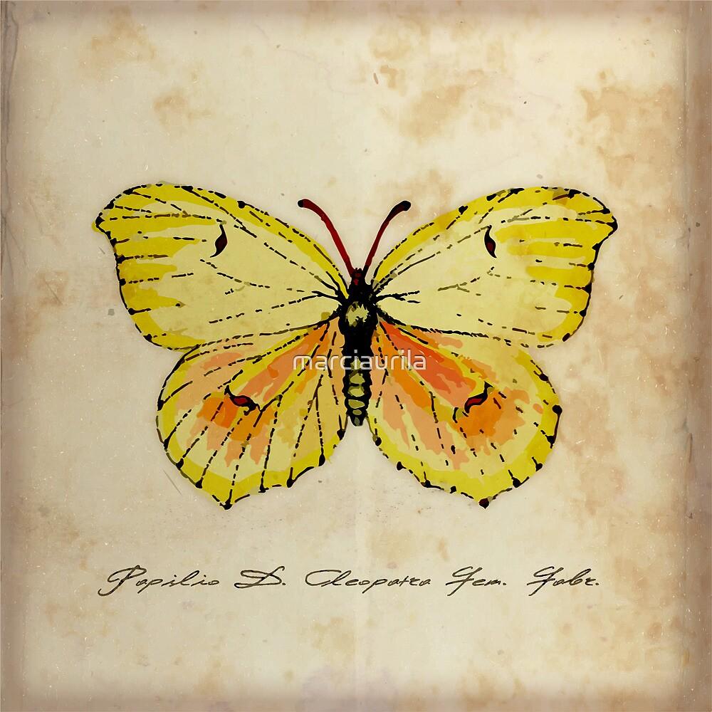 Cleopatra Butterfly German Moth Print by marciaurila