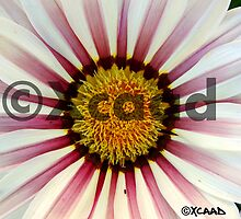Macro Magic - Flower - Watermarked by xcaad