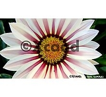 Macro Magic - Flower - Watermarked Photographic Print