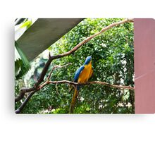 A single Macaw bird on a branch Canvas Print