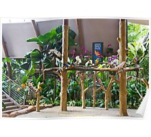 Colorful macaws and other small birds on trees at an exhibit Poster