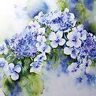 Hydrangea by Bev  Wells