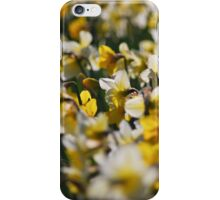 Daffodils I iPhone Case/Skin