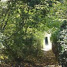 Tree Tunnel Ashridge Hertfordshire England by TOM HILL - Designer