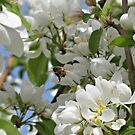 Busy Bee-Just For Mother Nature and Her Promised Beauty by Brenda Dahl