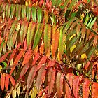 A Sumac Rainbow by Kathleen M. Daley