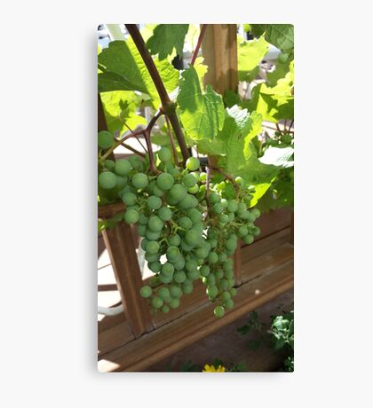 Do Grapes Dream of Becoming Wine?... Canvas Print