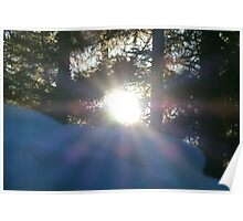 Rays Through The Trees Poster