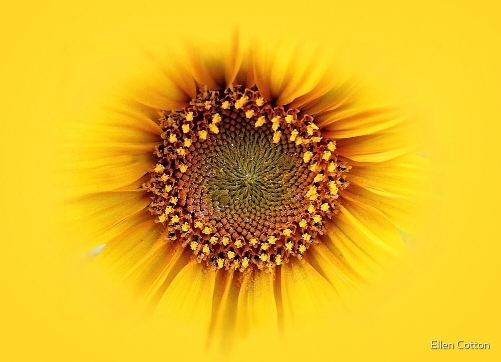 sunflower by Ellen Cotton