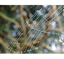 Sprinkles on a web Photographic Print